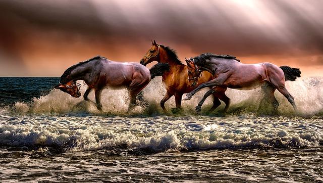 animal, horses, fauna