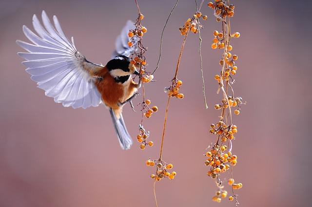 bird, wings, fluttering