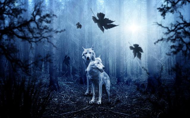 wolf, forest, dark